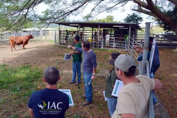 Les spécialistes des races bovines réunis à Bourail
