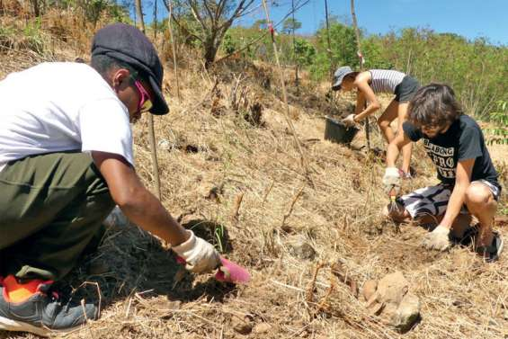 Mocamana plante 1 000 arbres à Fort Téréka