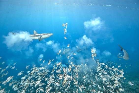 Les merveilles du monde sous-marin, un trésor à admirer et à préserver