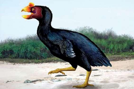 Des animaux spectaculaires qui ont disparu du Caillou