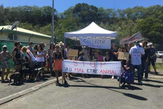 Le collectif Apanc se mobilise contre les euthanasies animales