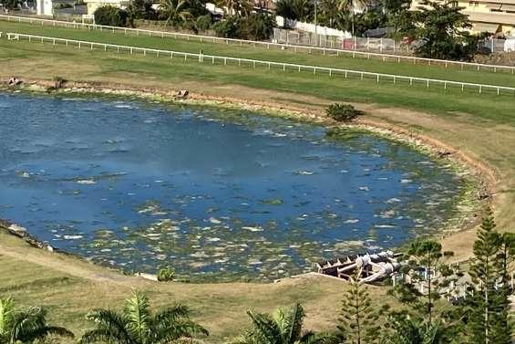 Lac de l'hippodrome : les premiers résultats révèlent une pollution d'origine