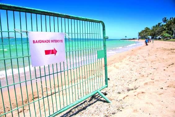Présence de méduses sur les baies, la mairie appelle à la prudence