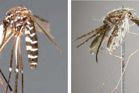 Deux nouveaux moustiques dans le viseur