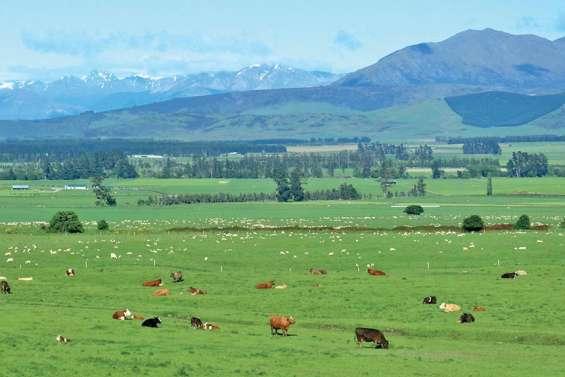 La Nouvelle-Zélande vise la neutralité carbone en 2050