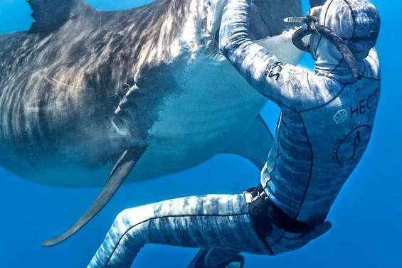 Pierrick Seybald, l'apnéiste qui endort les requins-tigres
