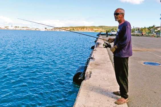 Faute d'anchois, on pêche des carangues