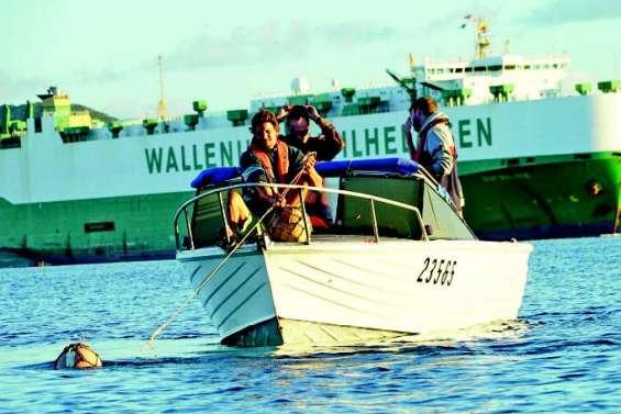 L'abattage de requins bouledogues divise profondément les Calédoniens