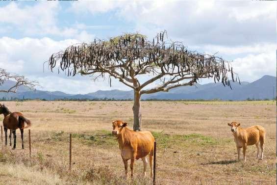 Le plan sécheresse de l'Agence rurale en vigueur le 15 octobre