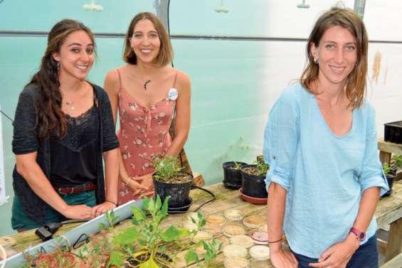 Des « plantes du futur » sous la serre de Boulari