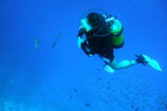 Les activités du club de plongée Amédée Diving suspendues pour 6 mois par les Affaires maritimes