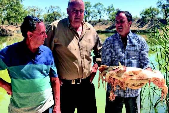 Un million de poissons d'eau douce trouvés morts