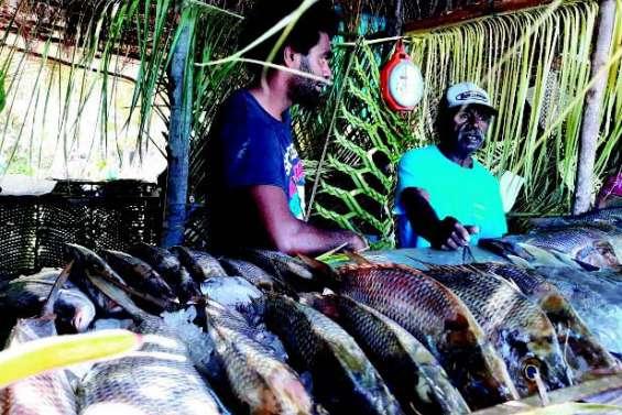 Les produits de la mer célébrés à Goro