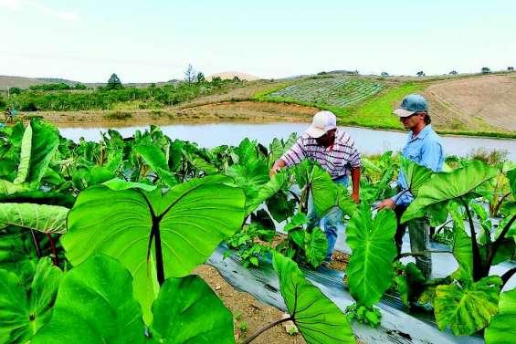 L'Agence rurale lance un appel à projets innovants