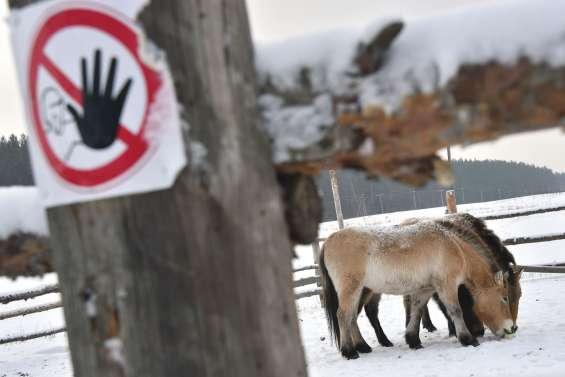 Tchernobyl est devenu une réserve d'animaux sauvages