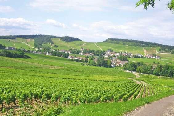 En Champagne, les vignerons restent optimistes