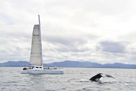 L'observation des baleines, mais pas à n'importe quel prix