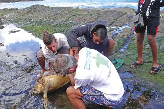 Tous mobilisés pour sauver Marvin la tortue
