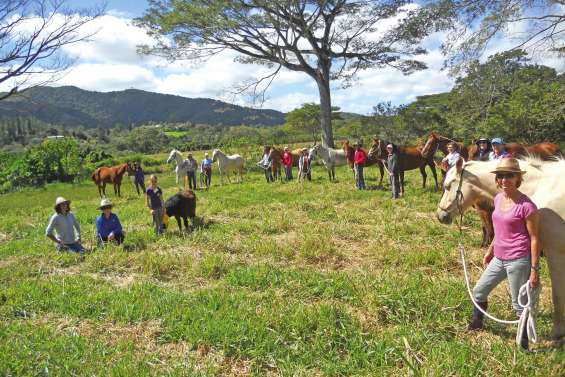 Cavalier et cheval  réapprennent à communiquer