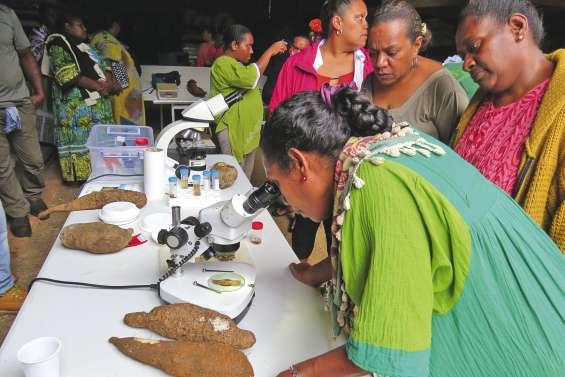 Les agriculteurs apprennent  à protéger leurs cultures
