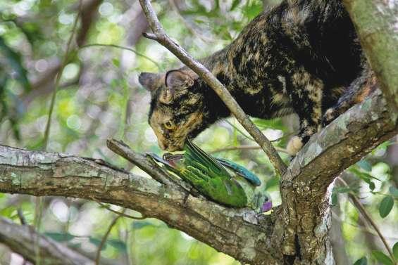 Zoom sur un super-prédateur qui pèse sur la biodiversité