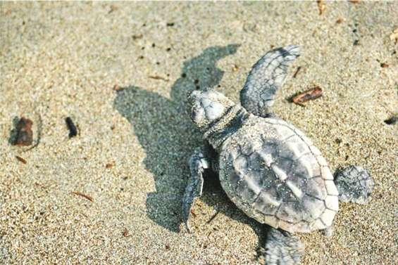 Observer les tortues sans les gêner