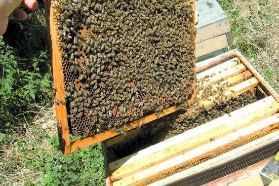 Les apiculteurs réunis à Boghen