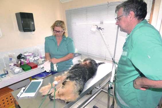 Une campagne de stérilisation animale en février