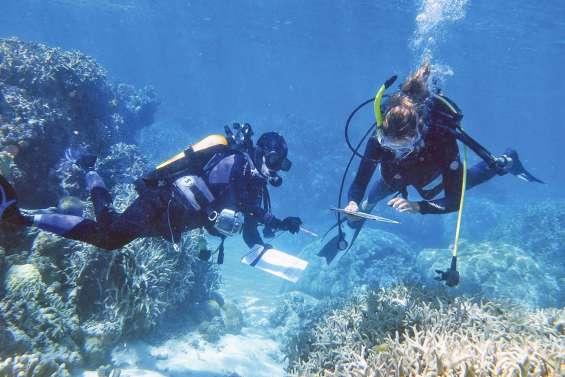 Des sentinelles qui veillent sur la santé du corail
