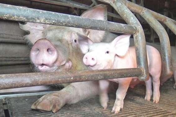 Maltraitance animale :une nouvelle plainte
