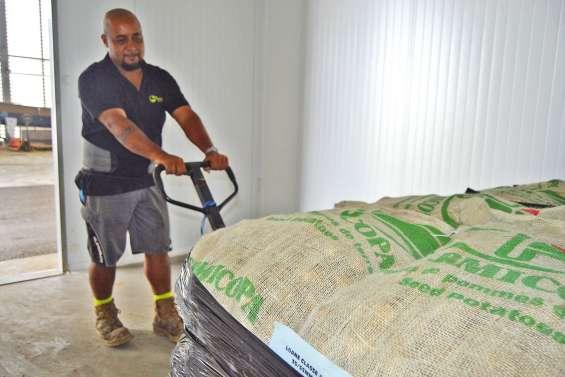 Dix tonnes de semences de pommes de terre sont au frais