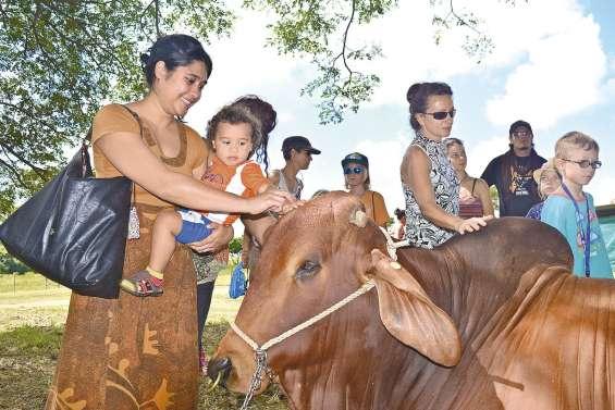 Réconcilier les jeunes avec le monde rural