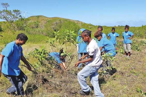 Les adolescents à l'assaut des plantes envahissantes à Ouano