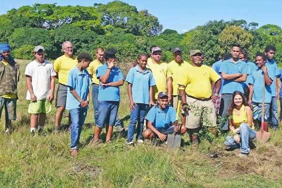 Les collégiens aux petits soins de la forêt sèche