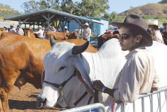A Bourail, les Calédoniens ont foi en leur agriculture