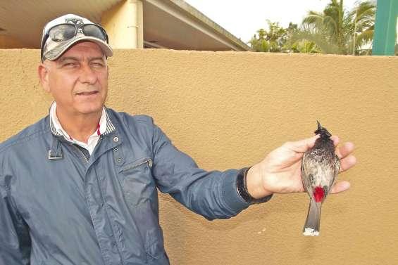 Un petit oiseau pour une grande  menace écologique