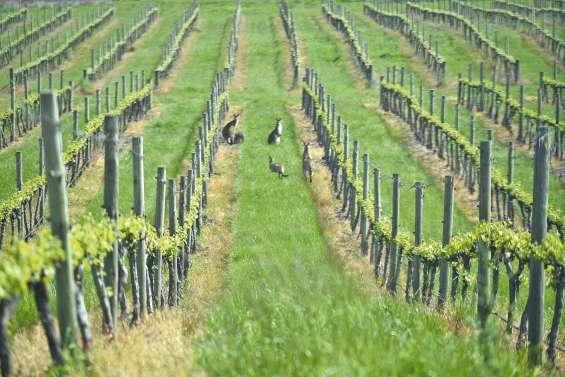 L'Australie, l'autre pays du vin