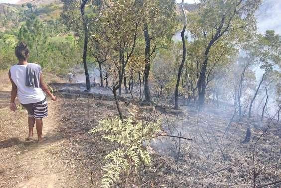 La plantation d'Azareu  réduite en cendres
