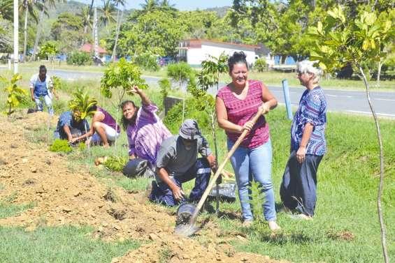Une initiative verte pousse à la mairie