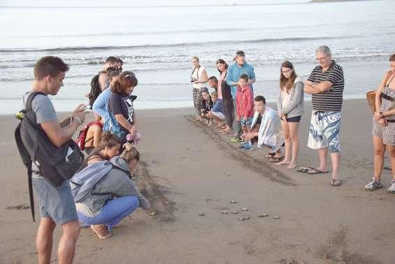 L'observation des tortues à la Roche-Percée va bientôt débuter