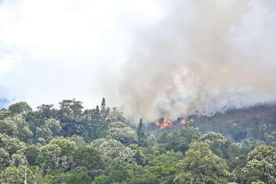 Des dégâts irréversibles sur la forêt