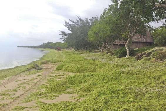 À Déva, des algues et des questions