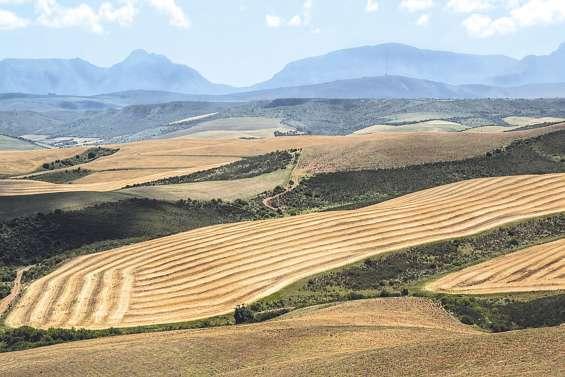 L'Australie veut proposer des visas aux fermiers blancs sud-africains