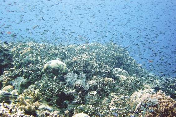 De la pêche industrielle dans les parcs marins