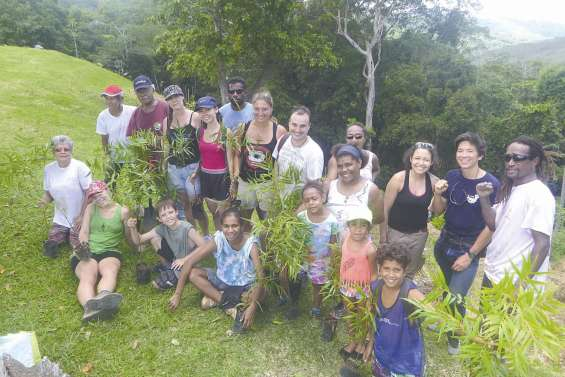 Planter des arbres pour compenser les émissions carbones