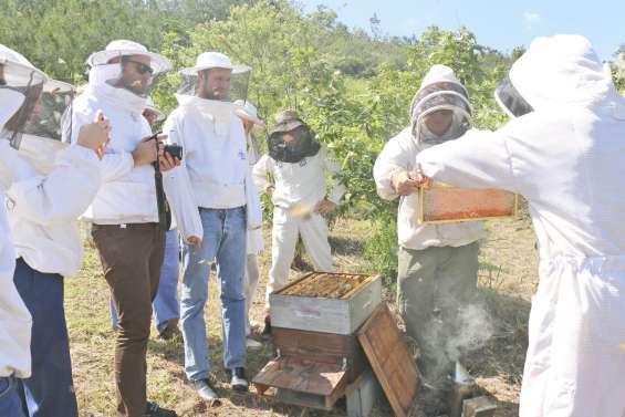 Les apiculteurs en démonstration  au rucher Natcha