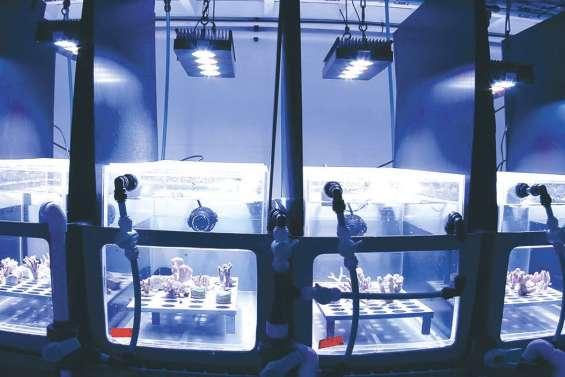 Un bouclier solaire pour les coraux