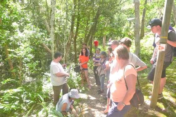 A la recherche des champignons  au parc des Grandes Fougères