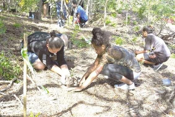 Une Fête de la forêt pour rappeler qu'il faut prendre soin du Ouen Toro