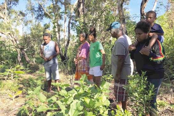 Un projet d'agroforesterie  sur terre coutumière